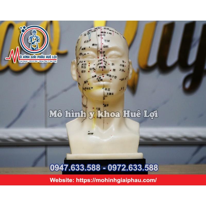 Mô hình huyệt vị đầu